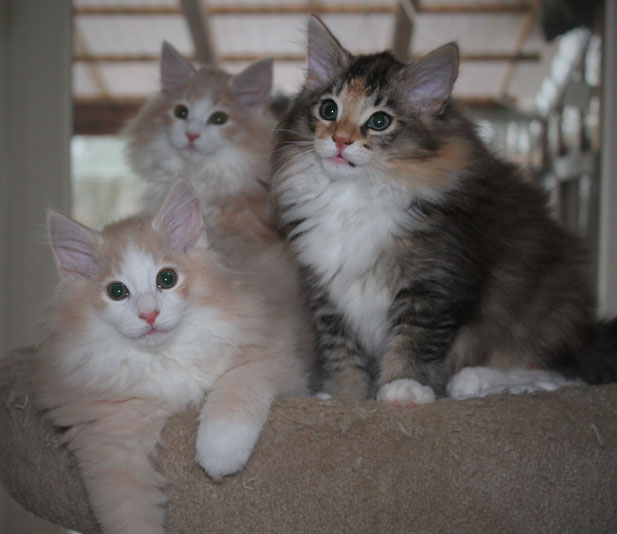 Neelix, Nanuk & Nessa