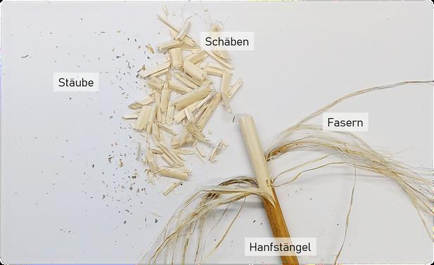 Bestandteile der Hanfpflanze - Hanfingenieur