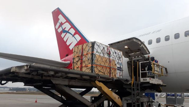 Bears on way from Fortaleza to Sao Paulo  -  photo: LATAM Cargo