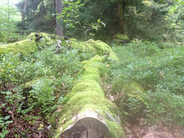 morbide Stimmung in den Heidewäldern