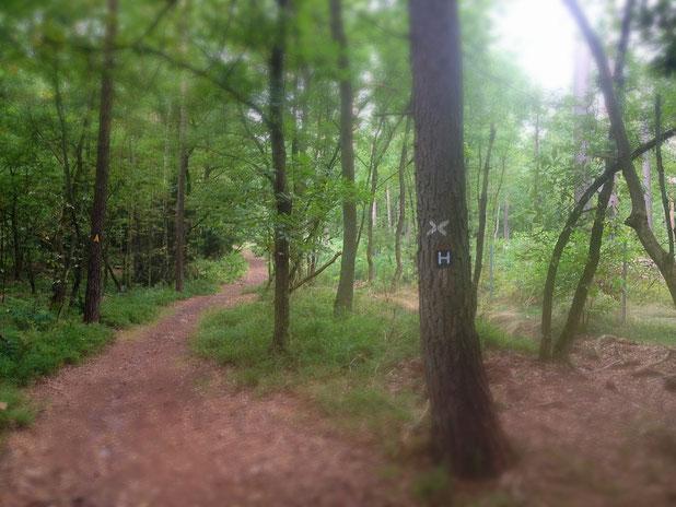 schmale Pfade führen durch lichten Heidewald