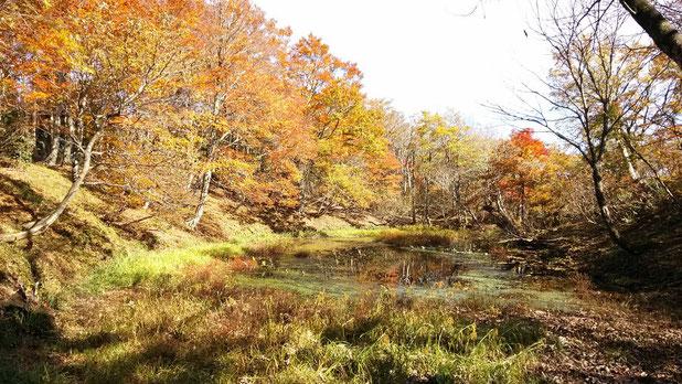 武周ヶ池 山頂直下にあるが年中水が枯れることないそうです