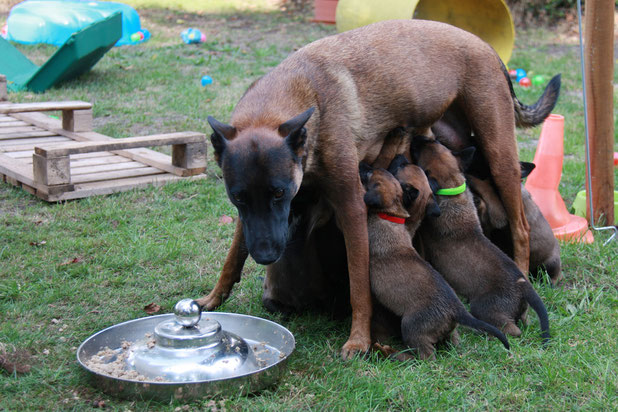 Peni-Mami fleißig bei der Arbeit ;-)