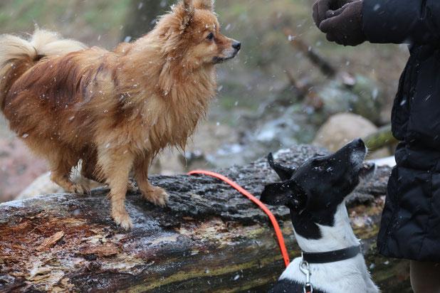 Hunde im Winter, Janina Hoch 2