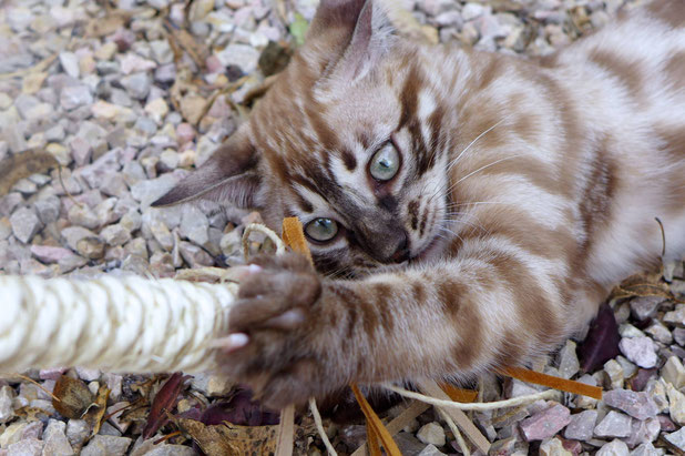 Die Kitten-Lederangel finde ich super klasse!