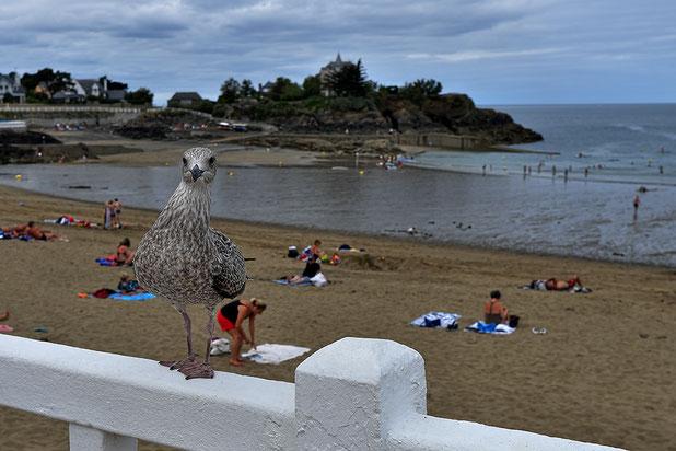 Mathieu Guillochon, photographe, rivages, couleurs, Saint Quay, côtes d'armor, Bretagne, plage, goéland
