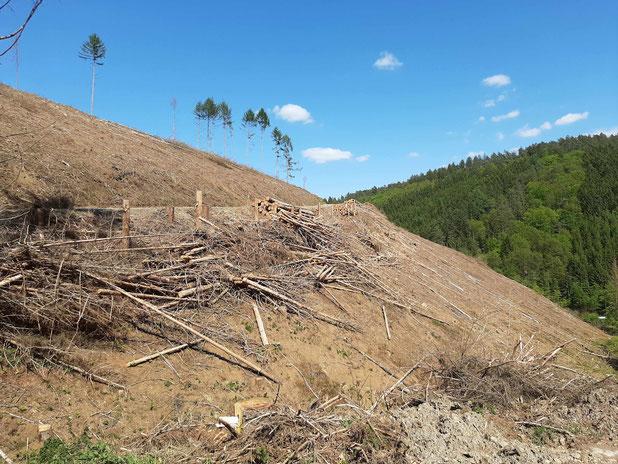 Geräumte Waldfläche vor Ort - unfehlbares Zeichen fortschreitenden Klimawandels