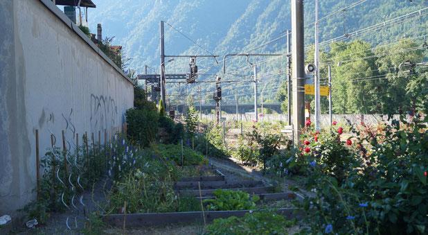 Le jardin où œuvrent adultes et enfants de Saint Michel de Maurienne, et d'ailleurs