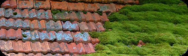 Moos auf dem Dach - Dachwartung