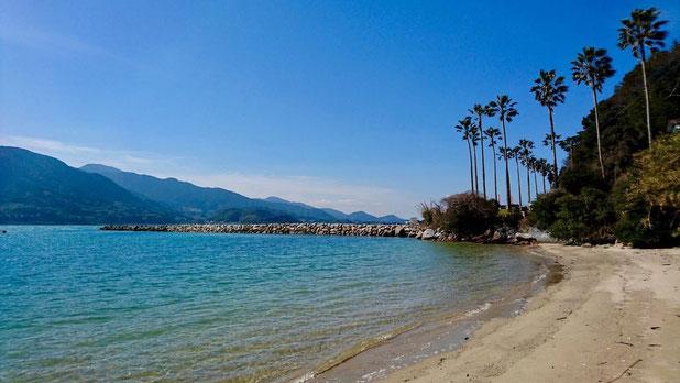福岡県糸島市二丈深江、深江海岸の椰子の並木 Palm trees and beach in in Itoshima