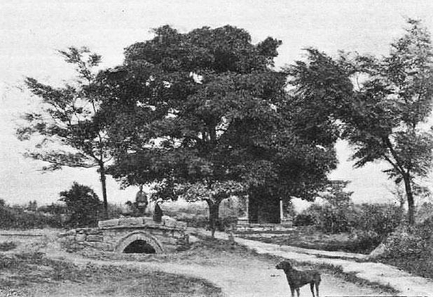 Un houang ko chou (figuier des pagodes) près de Moung-tse. - Mission lyonnaise d'exploration commerciale en Chine, 1895-1897. Récits de voyage. —  A. Rey et Cie, imprimeurs-éditeurs, Lyon, 1898.