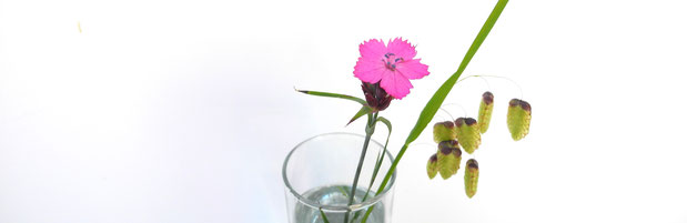 Frühling Blüten und Gras Mai