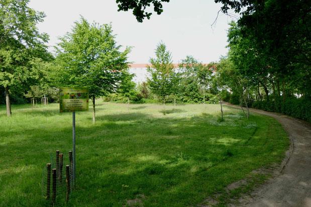 Eine der Blühwiesen der Stadt Lübben (Foto: A. Weingardt)