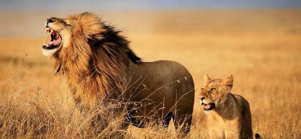 carnaval des animaux marche royale du lion