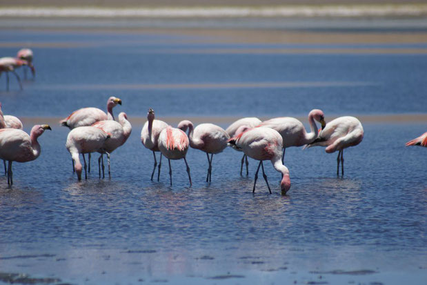 Organisierte Touren über den Salzsee von Uyuni mit BOLIVIENline