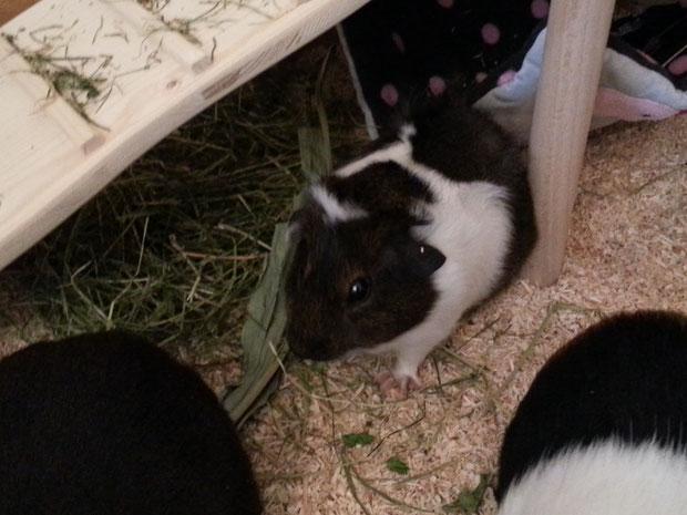 hier seht ihr unseren Oskar, er ist noch jung und auch sehr schüchtern