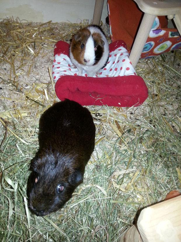 Frieda pisselt erstmal die Kuschelrolle voll, während Tilly auf Leckerlies hofft.