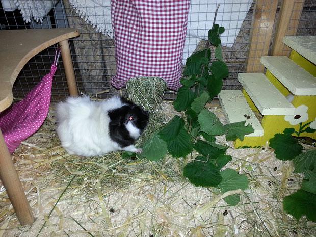 Wilma im Blätterrausch!