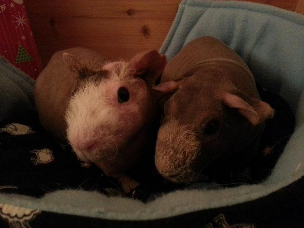 Angie und Cliff im Kuschelnest: Geschichten hören das ist fein, darüber freut sich jedes Schwein.