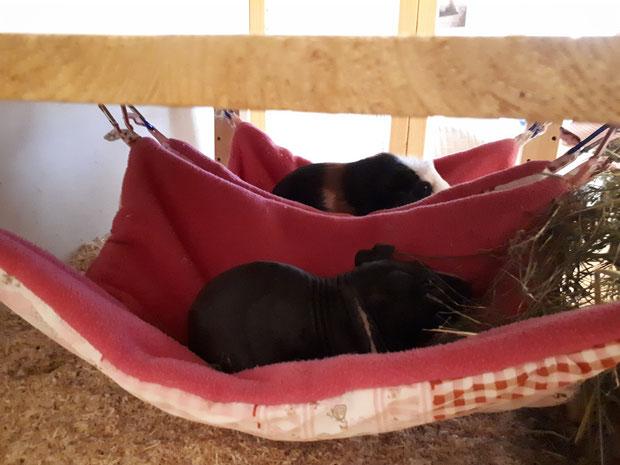 abhängen im Doppelpack Wombi und July