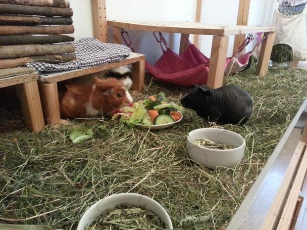 Kira, Mina und Wombi