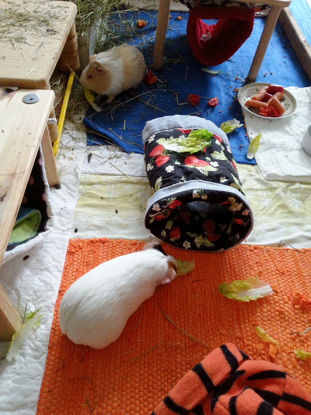 Hazelnut und vorne im Bild Ratatouille