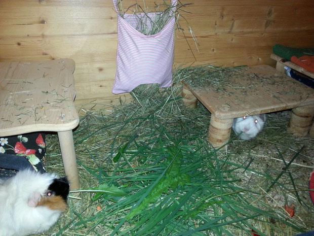 Alma und Rosa zur Graskur bei den Duftschweinen