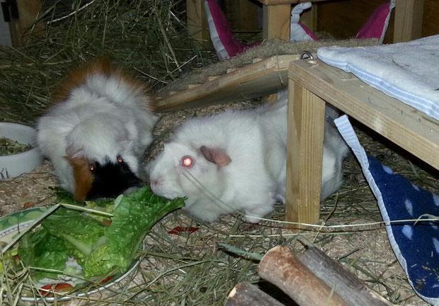 Rosa und Alma beim Futterschmaus