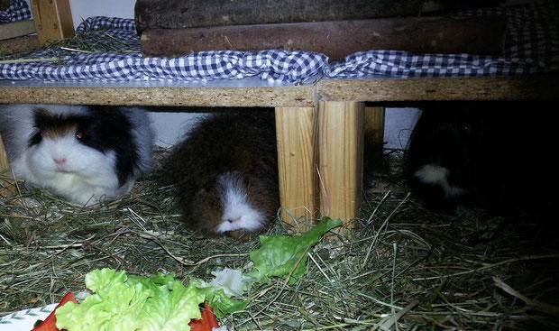 April mia wiard schlecht, mia auch Blue. Imma diesa Salad, alz wennet nix anners gibt  inne Feldmark.
