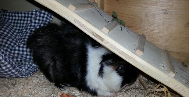 ... hat sich dann aber schnell unter der Treppen versteckt