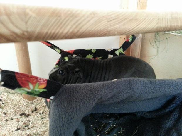 Ist die Wäsche dreckig legt Schwein sich auf den Kuschelsack.