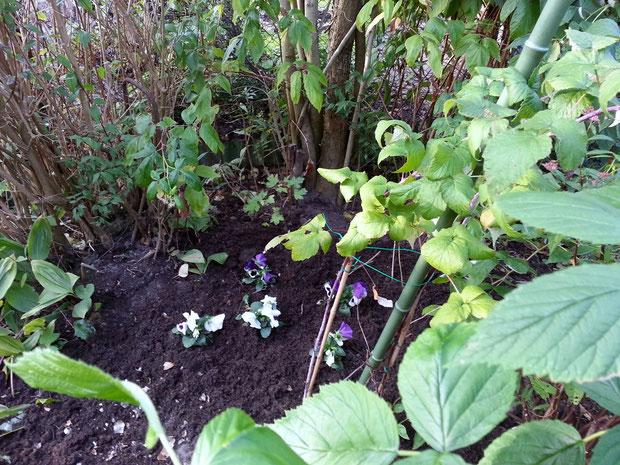 Ruheplatz bei Suzette und Frank im Garten