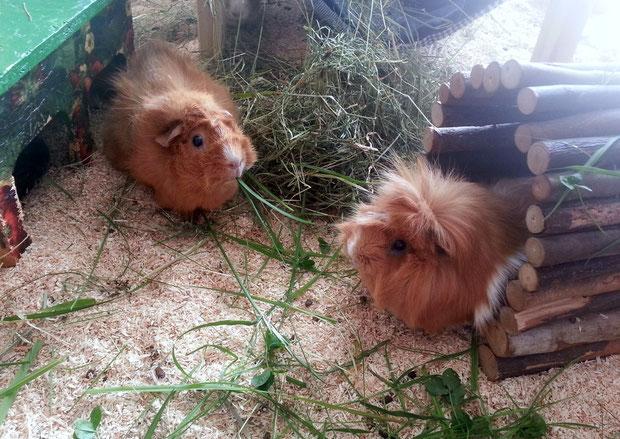 Mampf schluck Betty und Hazel beim Frühstück.