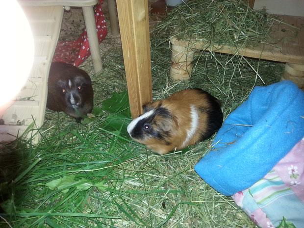 Linda und Barnaby