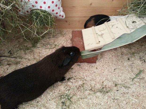 Tilly macht sich gannzz laaaannnggggg und schlank