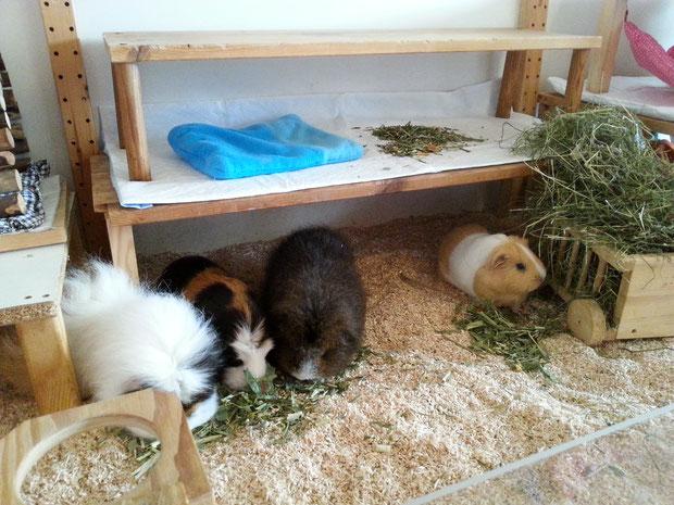 Honey Trüffelschwein, April, July und Mina im Oktober 2018