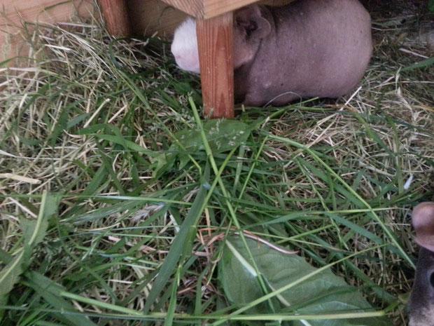 Von mia gibbet keinen Augenaufschlach füa det Gras. Langgenuch mussten wia jez warten.