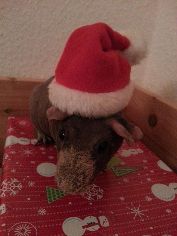 """Clifford fragt """"he du 2-Bein, wann ist Weihnachten"""".  Er kann es kaum erwarten sein Weihnachtspaket auszupacken."""