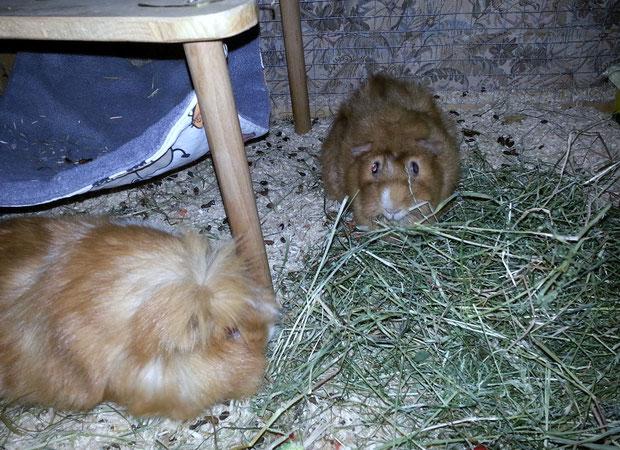Lass unnz noch schnell wat futtarn Hazel, bevor wia nach Hause fahren.  Psst Betty, Emil sacht wia solln Kaffa packen.