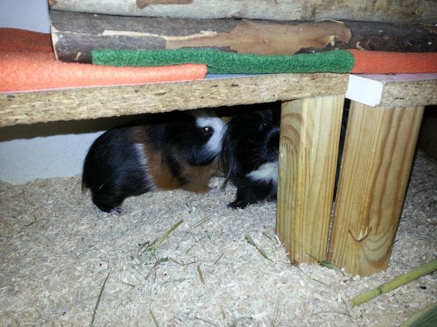 Blue und July: Geheimschweine unter sich