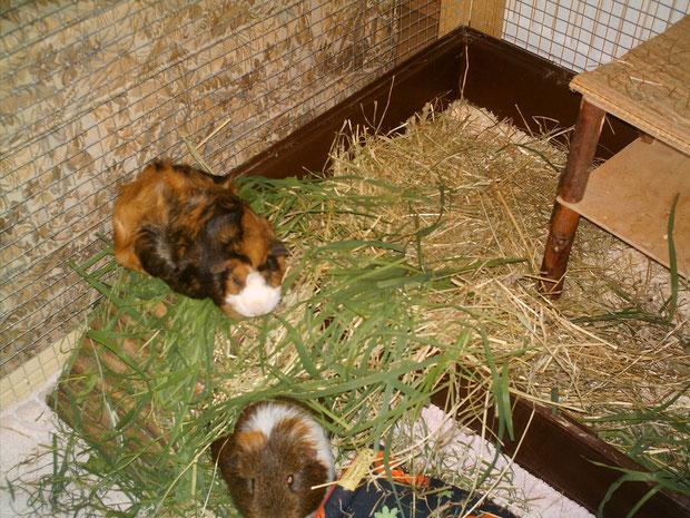 Baby und Max Santos 2007 im Urlaub bei den Duftschweinen