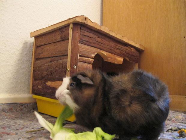 Baby Santos im Januar 2012