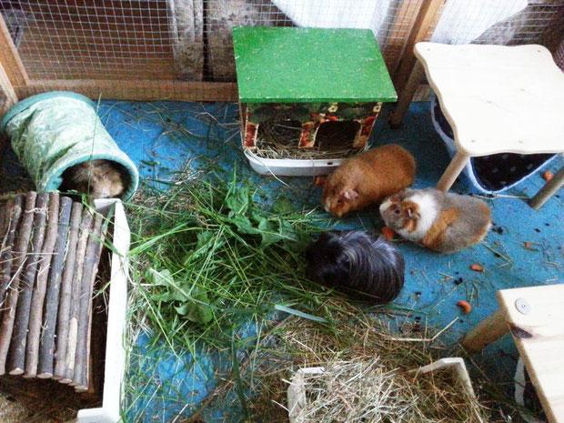 Hazel, Roxanne, Buggins und Bailey beim Hälmchen vernichten.