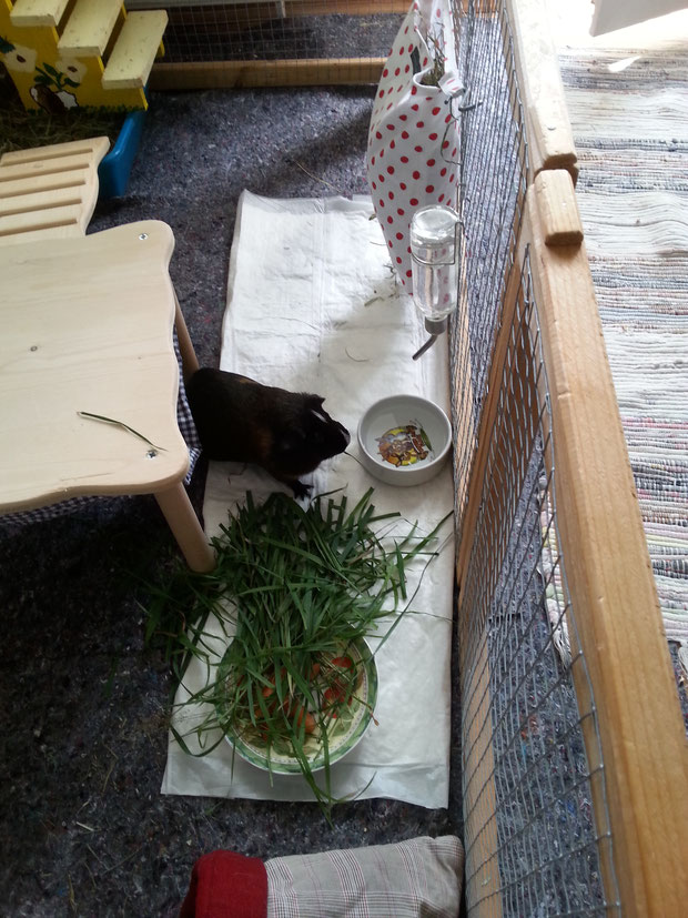 Barnaby beim 2. Frühstück
