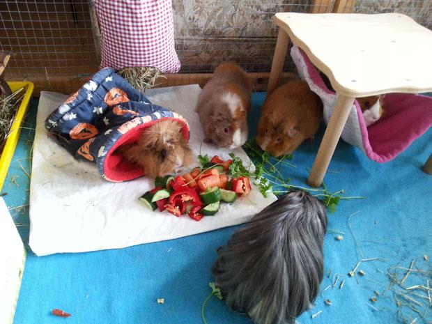 Hazel's letztes Frühstück mit den Schweinchenfreunden