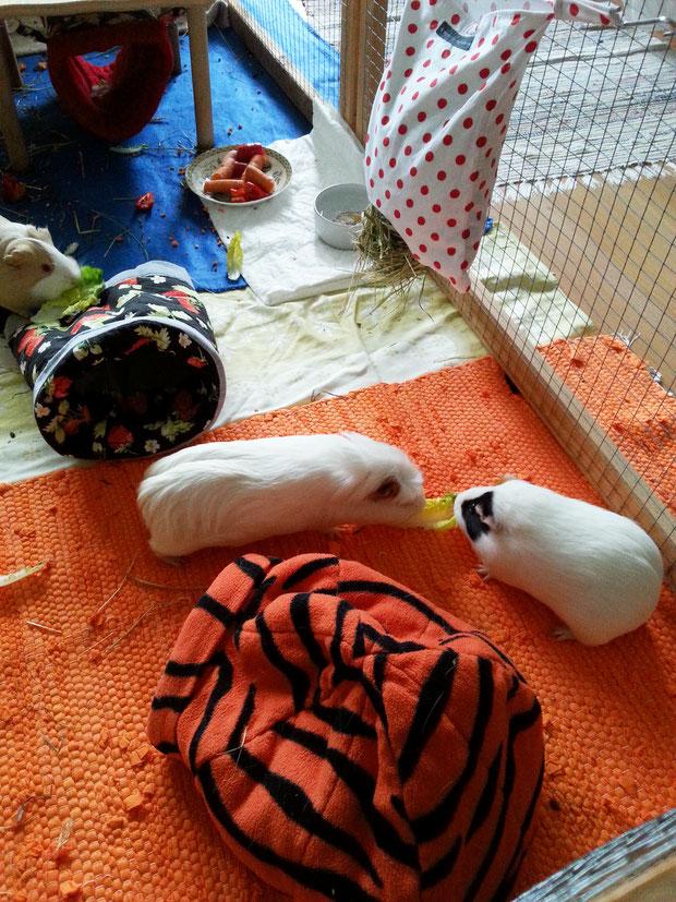 Hazelnut's Nase, Flocke und Ratatouille