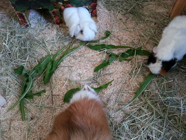 am Sonntag gab es Leckerzahn aus Susi's Garten -:)