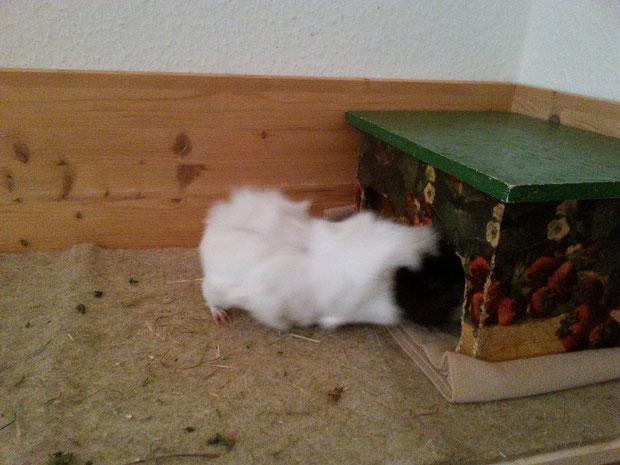 Wilma sucht und sucht