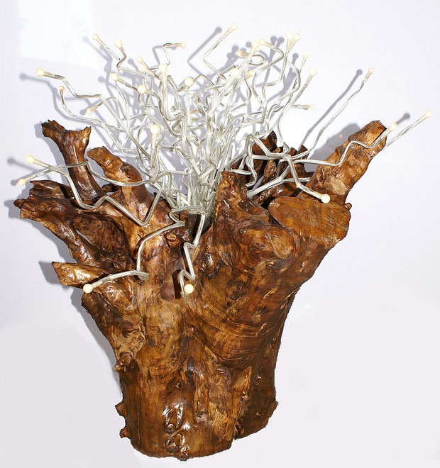Lichtwurzel Wurzel