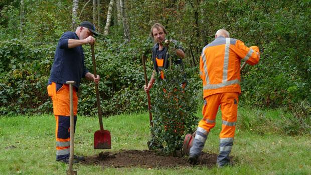 Die Mitarbeiter des Bauhofes, denen Bürgermeister Köppl in seinem Grußwort für ihre Unterstützung gedankt hatte, sorgten wie jedes Jahr für eine fachgerechte Vollendung der  Anpflanzung